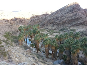 Palm Canyon outside Palm Springs Ca.