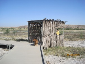 There are about 5 blinds like this one built along the trail through the wetlands