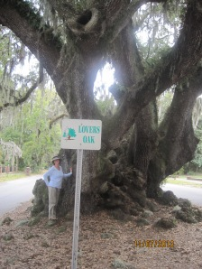 This huge 900 year old Oak Tree is called the Lovers Oak and was around when the Constitution was signed,,, WOW!!
