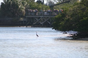 Those people are not just looking at that Crane. It's actually the best spot to look for Manatee.