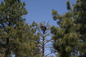 That bear was pretty big to be in the top of that tree LOL!!!