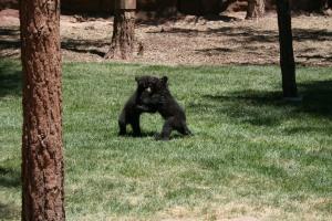 The cubs were so cute.