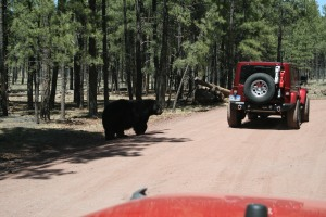 I think Bob and Karen had some food in the Jeep that the bear wanted.