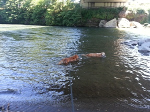 Jack and Felix cooling off in the Rouge River in the middle of a relaxing 5 mile hike.