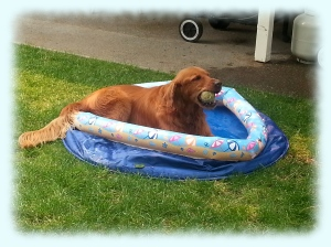 Jack gets spoiled at Rich and Chris's with his own wading pool. It helps keep him out of the pond LOL!!!