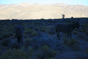 We ran across these after leaving Red Rock Canyon on our drive home.