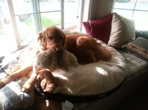 Jack likes his bed up on the window bench.