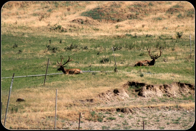 These Elk were on a farm but still worth a picture