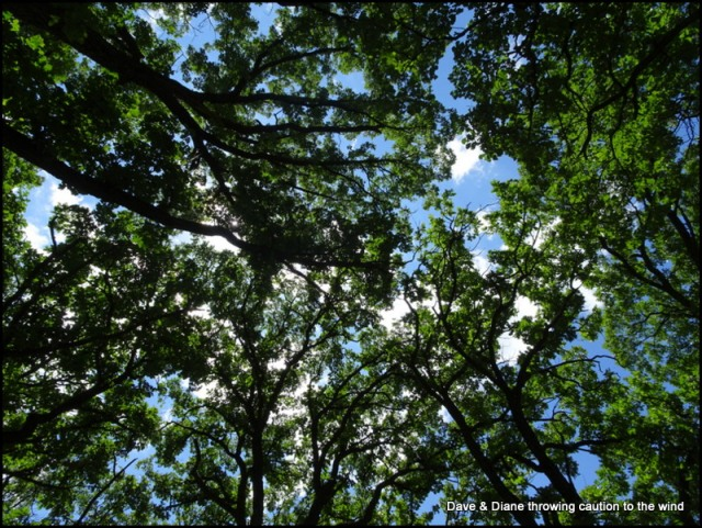 We love the canopy of tree's we find in this area so much