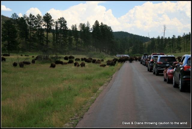 A South Dakota traffic jam.