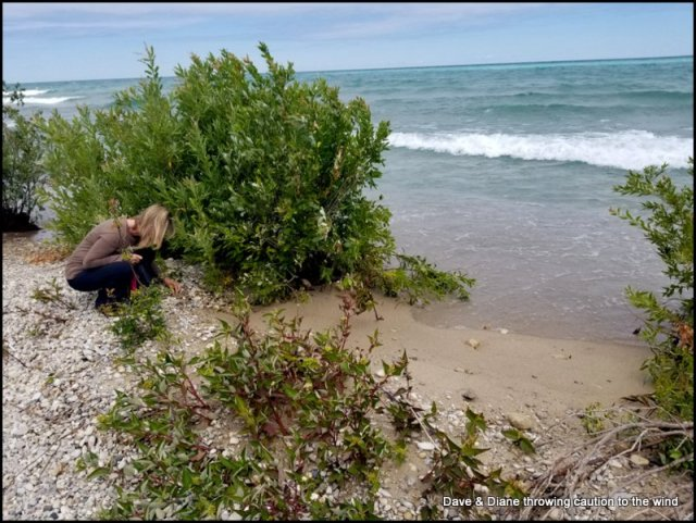 Looking for Petoskey Stone